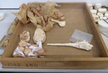 Os provenant de la collection de paléontologie du Muséum National d'Histoire Naturelle (Paris)  ©Léa Lydie De Bruycker