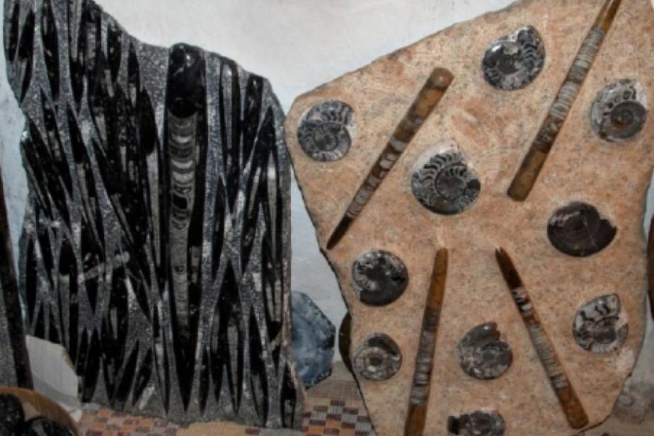 Blocs pétris d'Orthoceras du Paléozoïque (Siluro-Dévonien), Sud marocain, région d'Erfoud ©P. De Wever