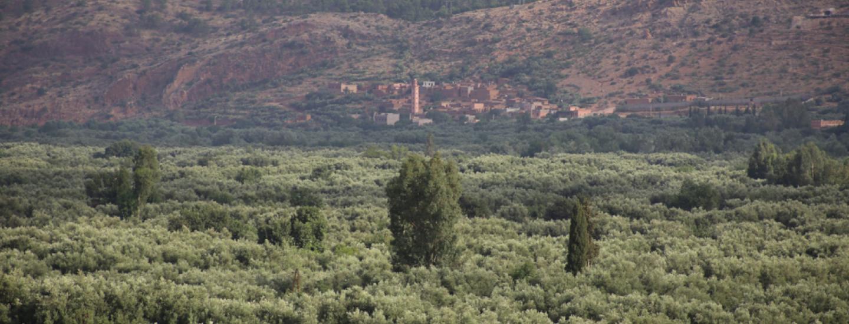 L'oliverie du Zat, 19/07/2015